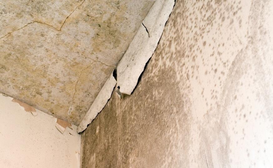 Osuszanie dachu i poddasza z firmą Wysusz Dom